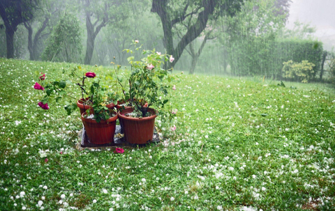 Prevent Hail Damage: Move or Cover Outdoor Planters