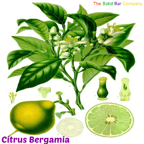 Facts You Need To Know About Bergamot!