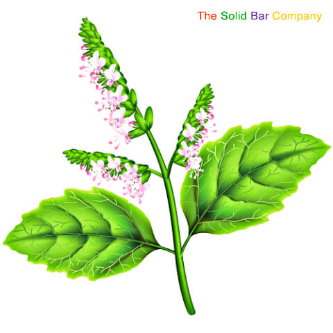Patchouli flower at The Solid Bar Company