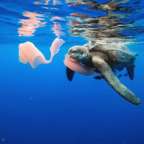 Turtle eating wet wipes