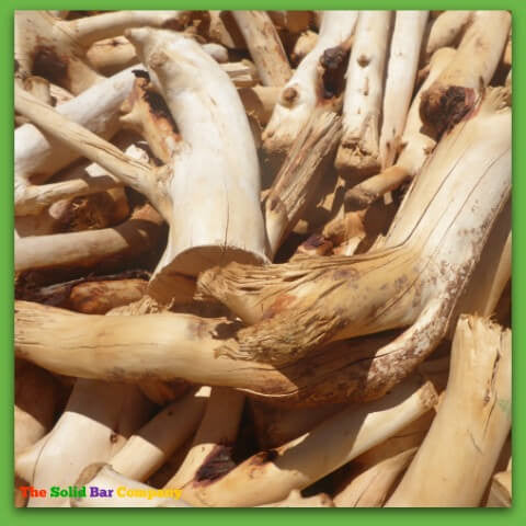 Image of freshly cut sandalwood