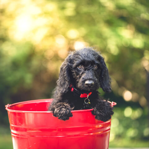 Small black dog in a bucket