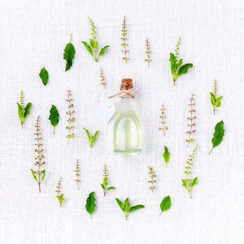 Circle of essential oils and herbs