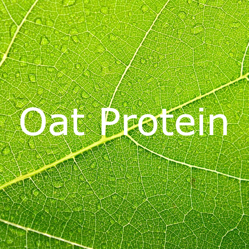 Oat Protein