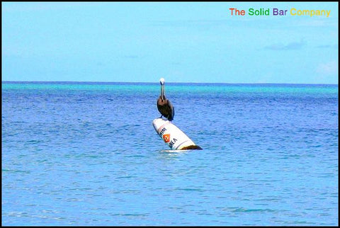 Early morning fisherman on the US Virgin Islands; a pelican.