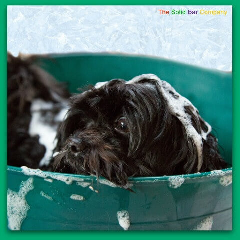 Image of a dog in a large tub being washed and having a shampoo
