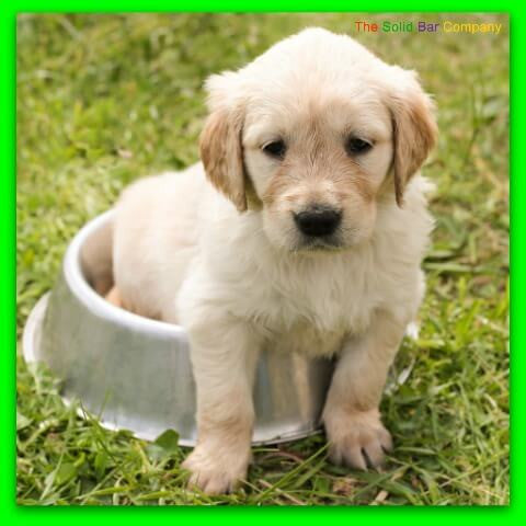 Image of a puppy sitting in a drinking bowl