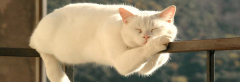 Image of a dozing relaxed cat