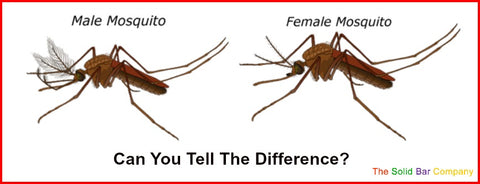 Image of male and female mosquitoes
