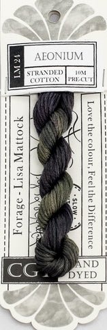 Aeonium - NEW Cottage Garden Threads Forage Collection