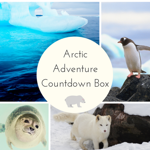 2020 Arctic Adventures Small Batch Countdown Box - Complete Payment