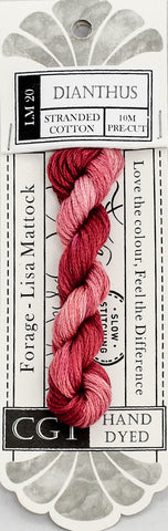 Dianthus - NEW Cottage Garden Threads Forage Collection