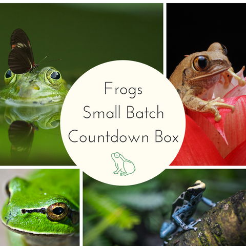 2021 Frogs Small Batch Countdown Box - Complete Payment
