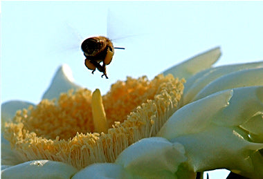 Photo of Flower and Bee