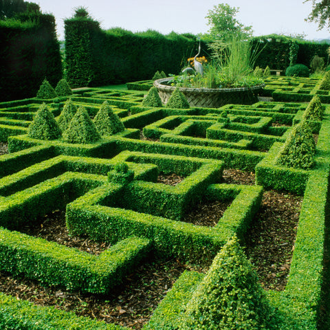 Topiary Care
