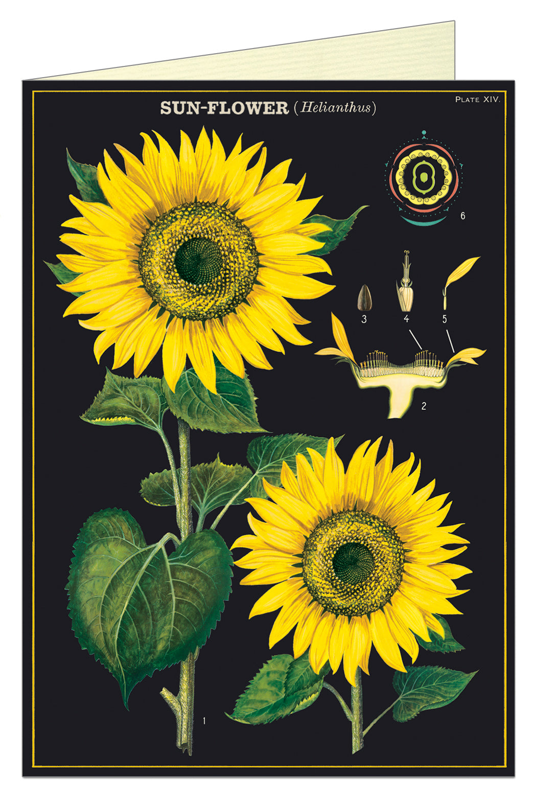 Cavallini Greeting Card - Sunflowers