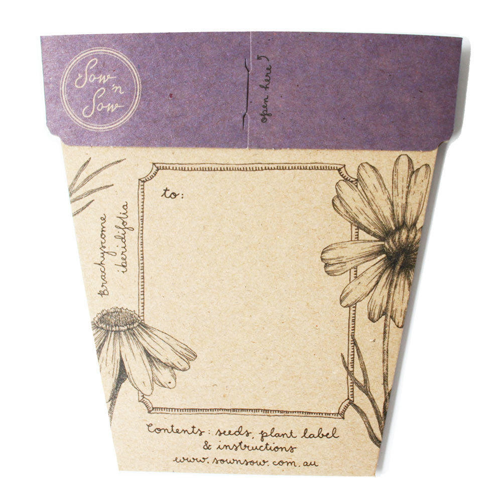 Swan River Daisy Gift of Seeds Card - The Potting Shed Garden Tools