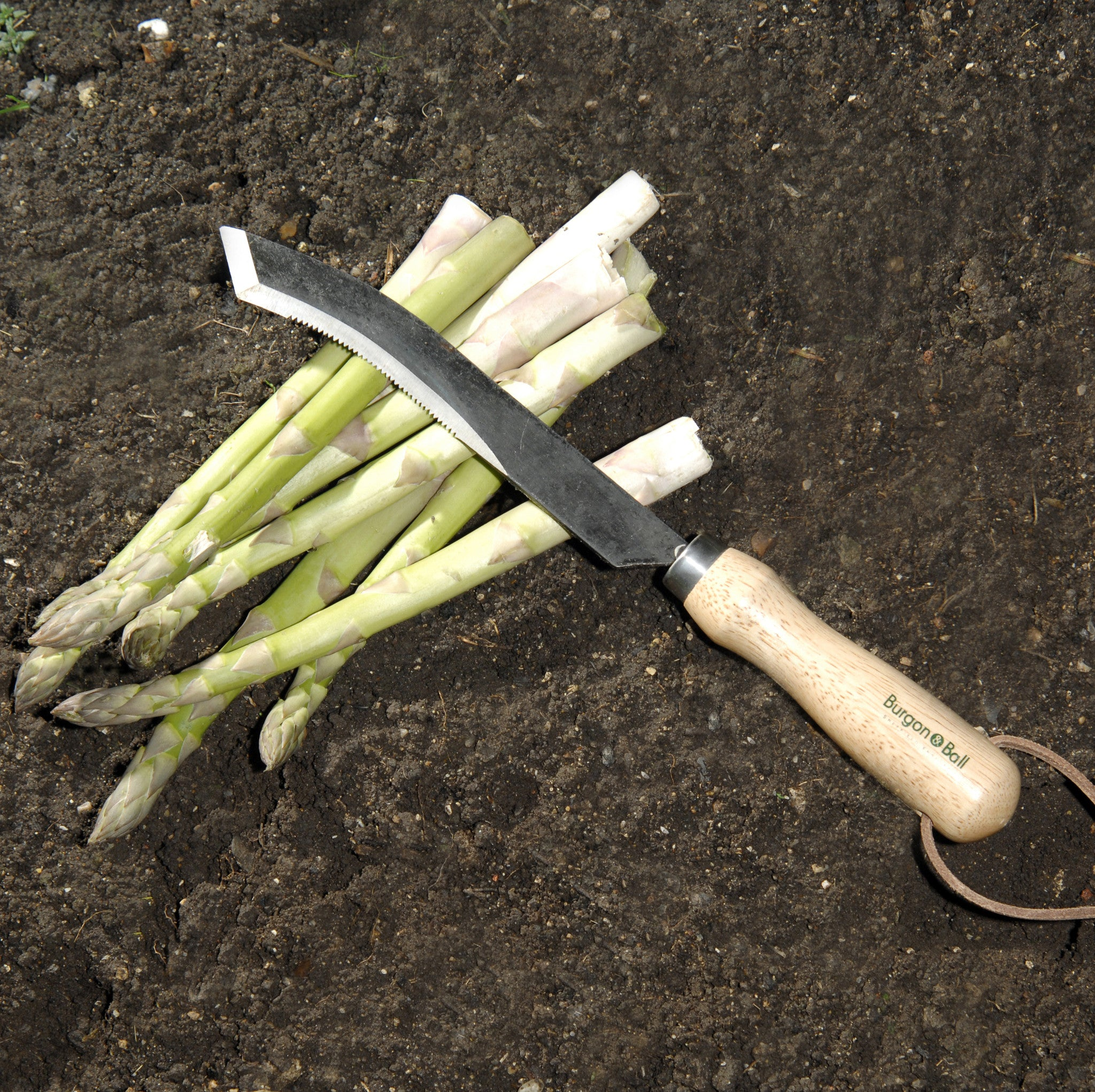 Asparagus Knife - The Potting Shed Garden Tools