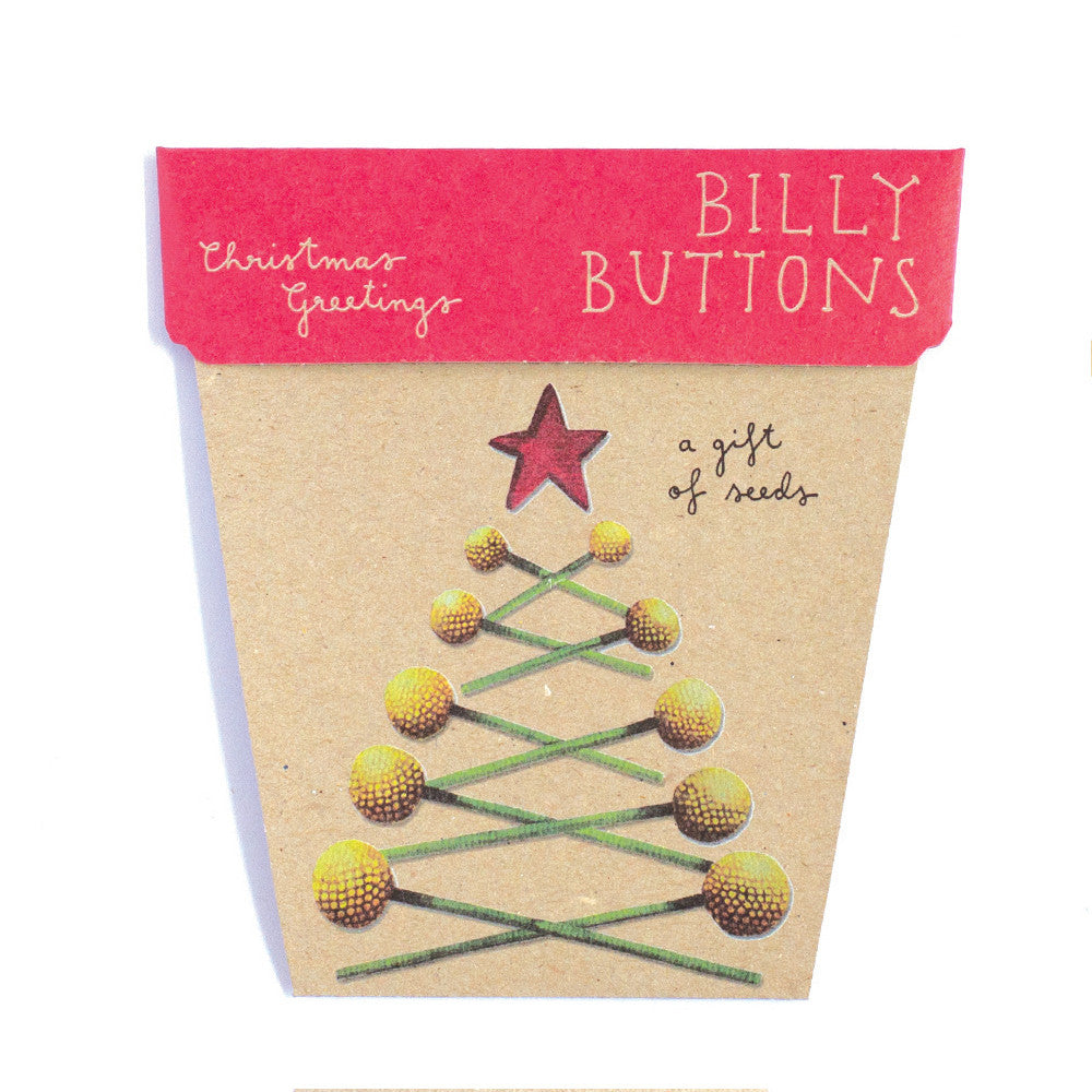 Christmas Billy Buttons Gift of Seeds Card - The Potting Shed Garden Tools