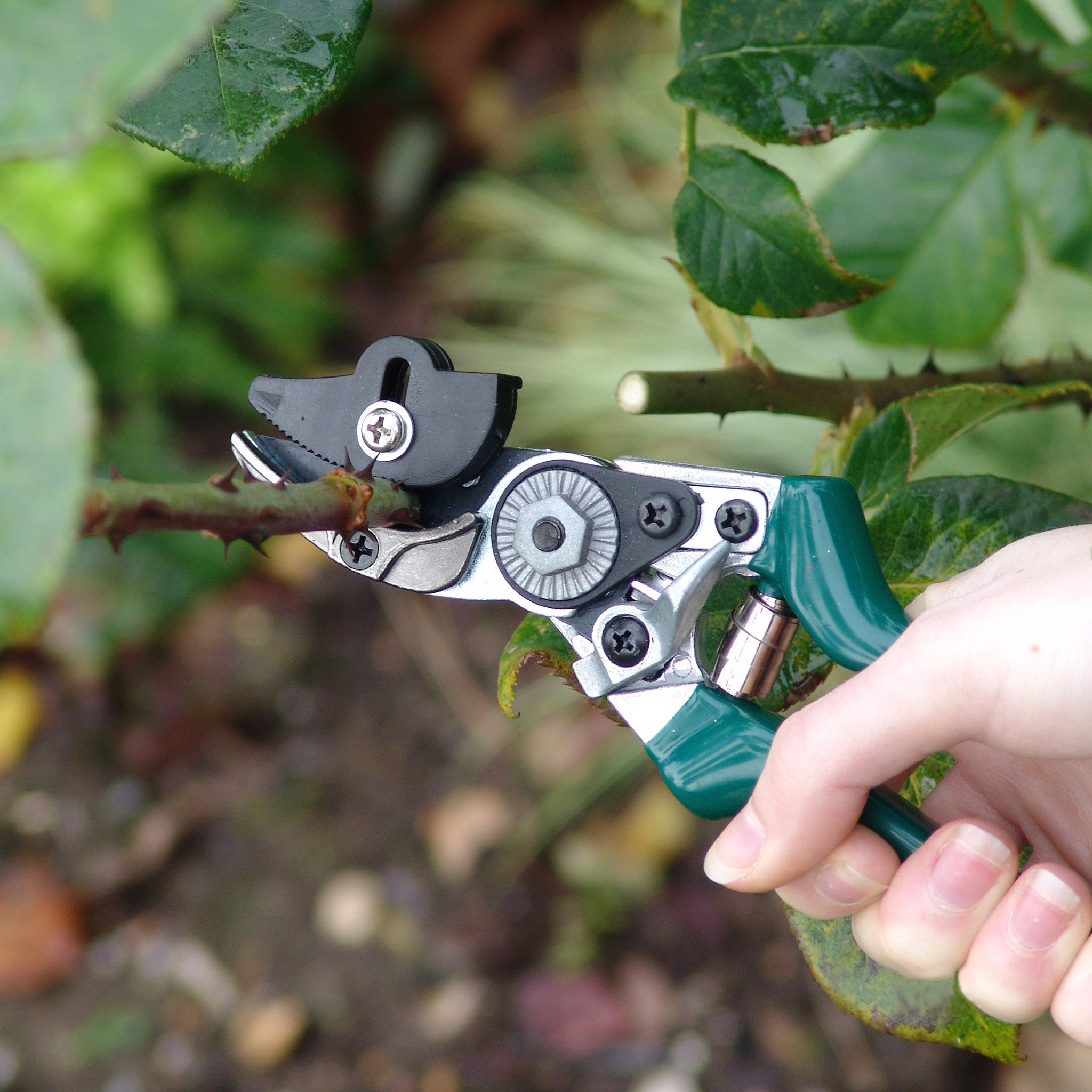 Rose Pruner - The Potting Shed Garden Tools