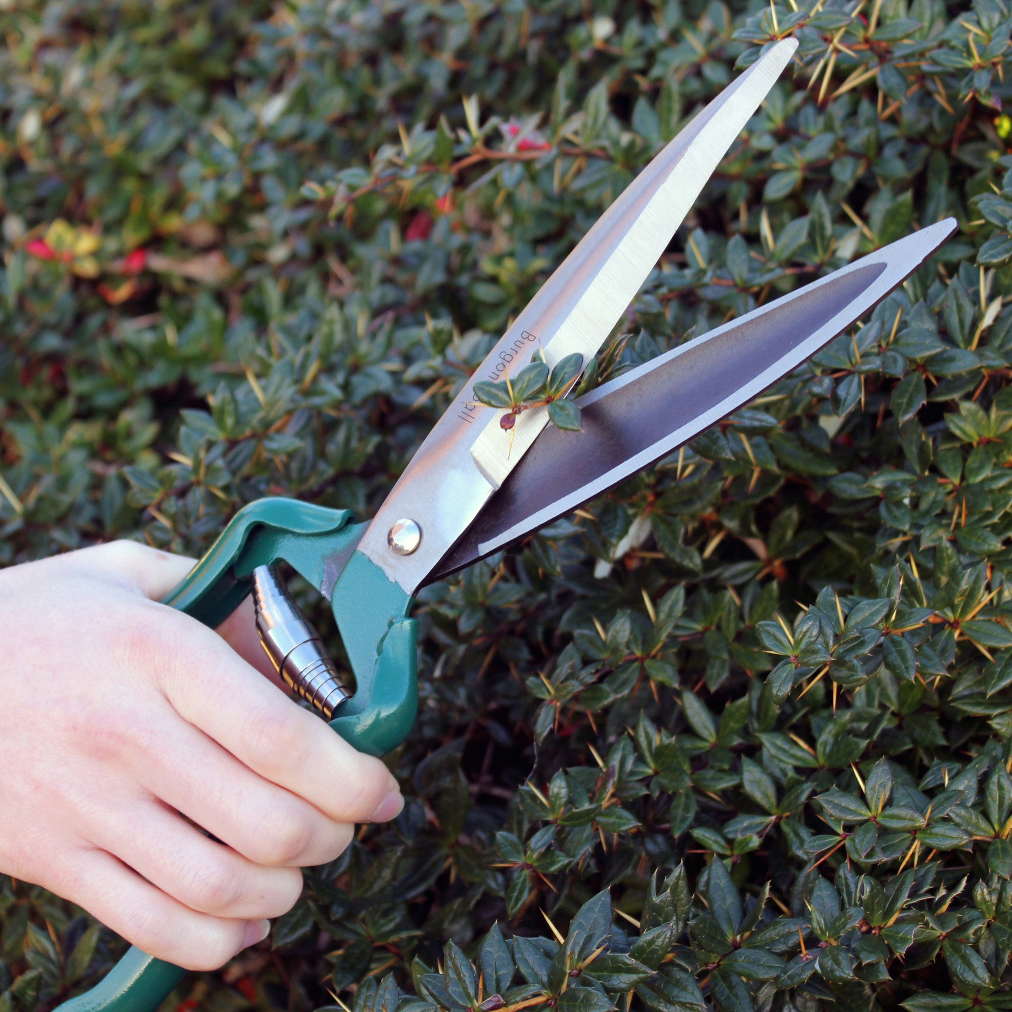 Shrub Shear - RHS Endorsed - The Potting Shed Garden Tools