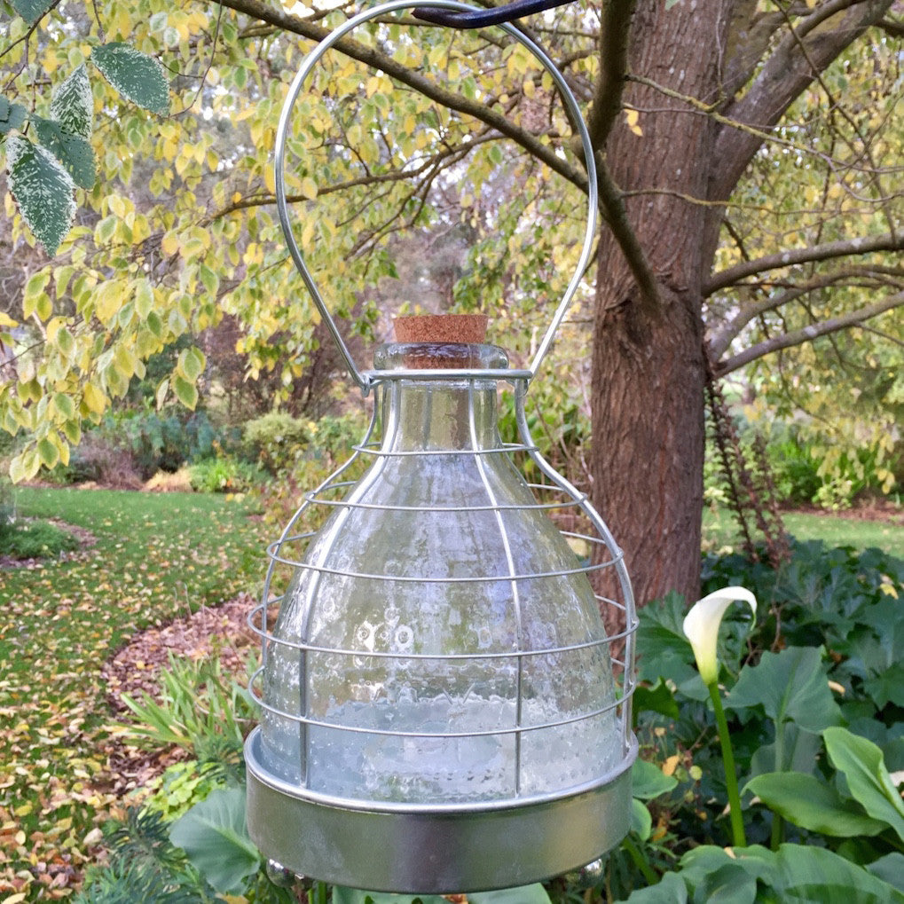 Glass Wasp Trap- Large