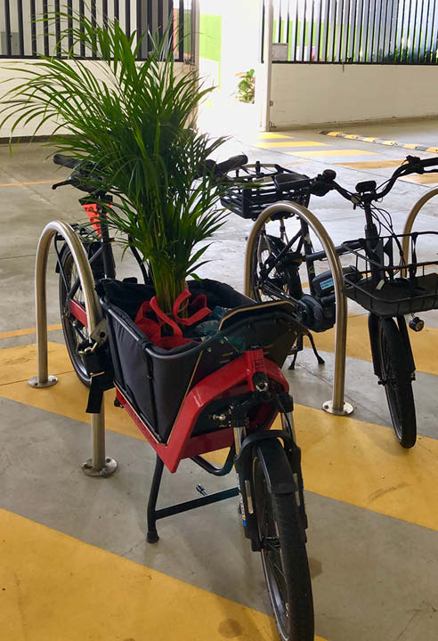 Riese & Muller Packster 40 cargo ebike with golden cane palm