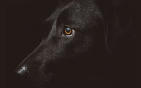 Niki Clarke | My Black Dog