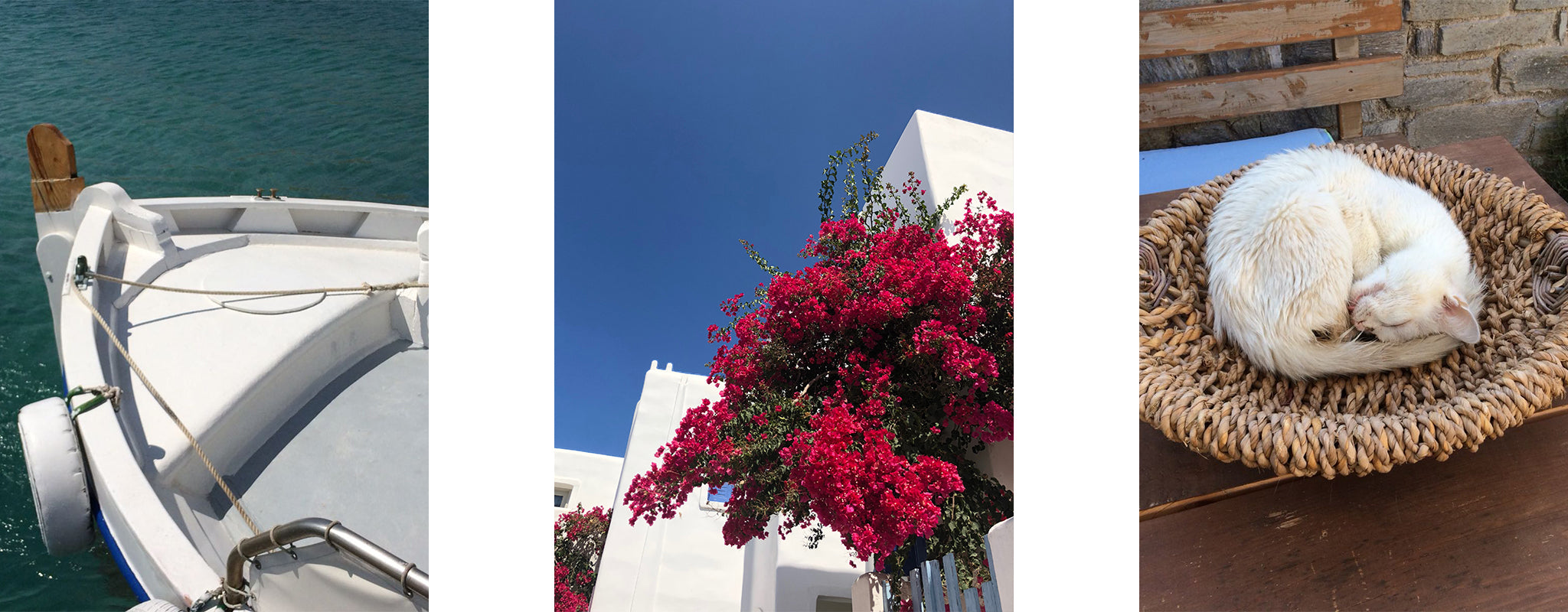 Greece boat flowers kitten