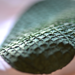Green fish leather fish skin
