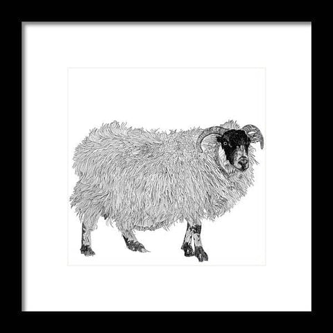 Aries - Framed Print