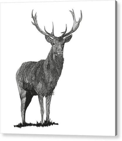 Stagger - Drawing 2 - Acrylic Print