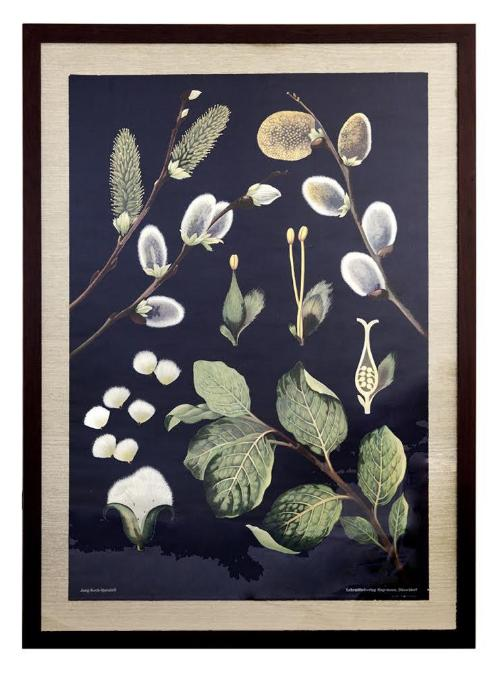 Vintage, Mid-Century German Botanical School Chart, Custom Framed
