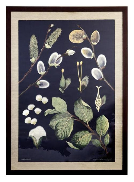 Mid-Century German, Botanical School Chart, Custom Framed | City of Z Design - City of Z Design