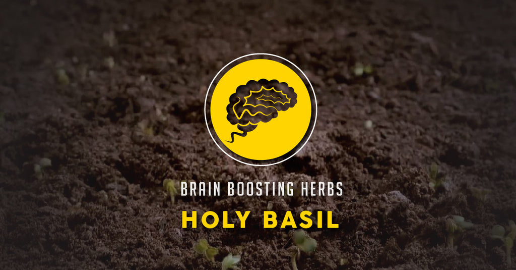 Brain Boosting Herbs: The Badass Benefits of Holy Basil