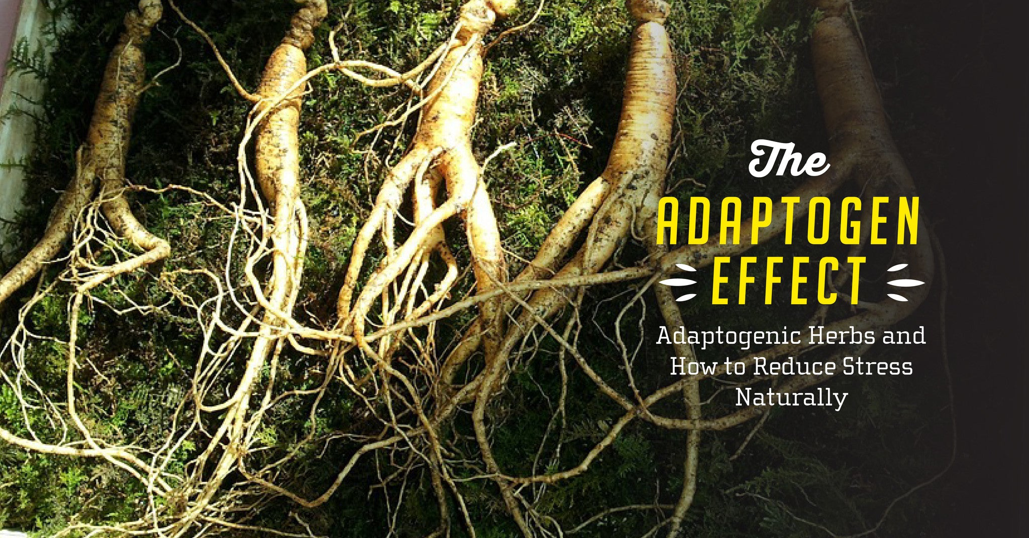 Reduce Stress Naturally with Adaptogenic Herbs