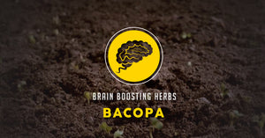Brain Boosting Herbs: The Power of Bacopa