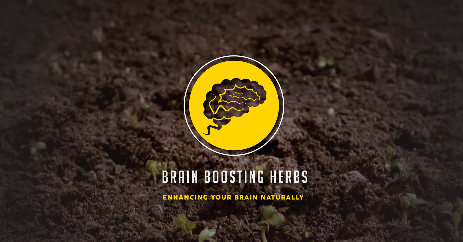 Brain Boosting Herbs: Enhance Your Brain Naturally