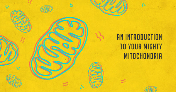 An Introduction To Your Mighty Mitochondria