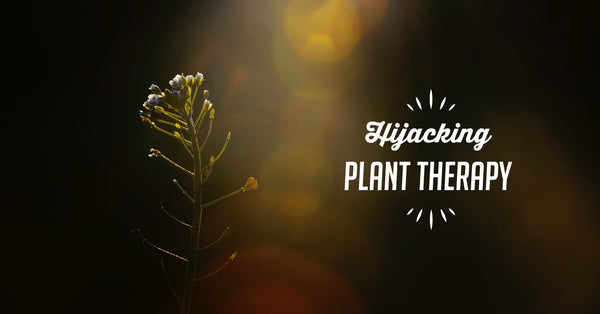 Hijacking Plant Chemistry: 4 Healthy Herbs for the Body