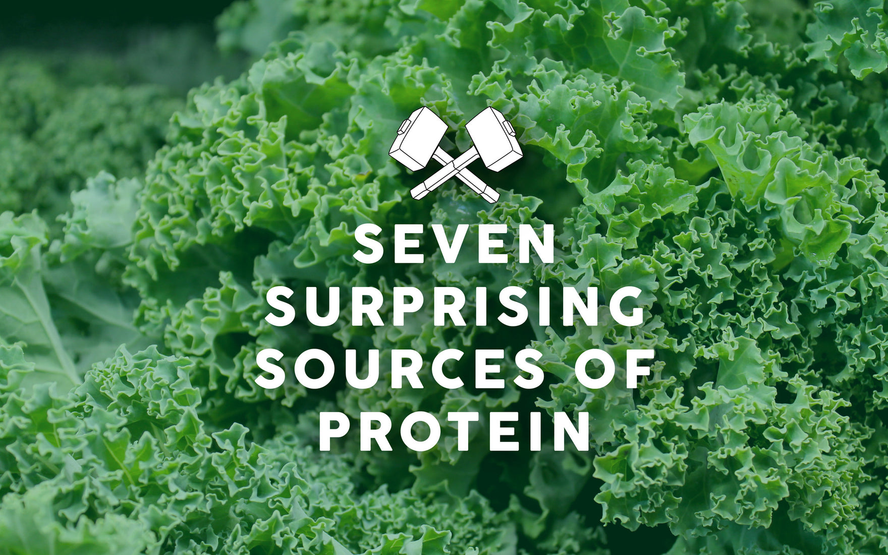7 Surprising Plant Protein Sources
