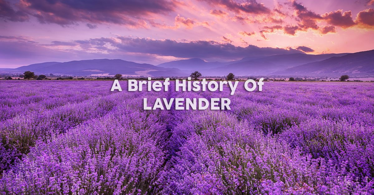 A Brief History of Lavender Uses