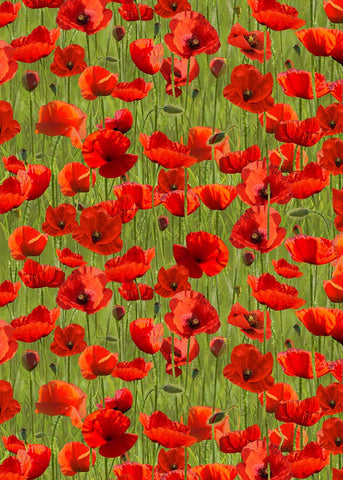 Remembering - Poppies - 7117D