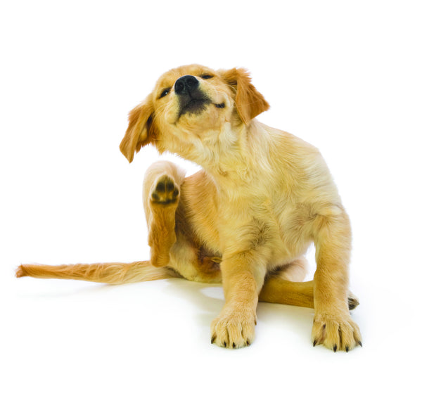 Does your pet have itchy skin?