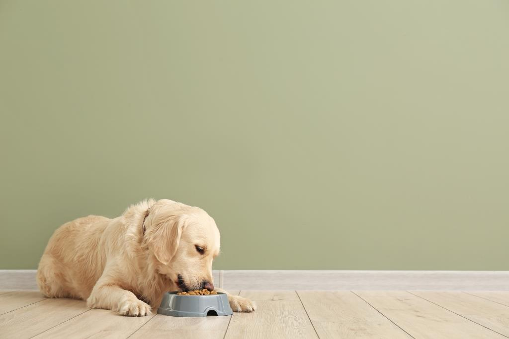 How much & How often to feed a dog?