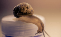 Beauty Trend - Snails