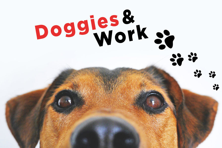 Why You Should Bring Your Dogs To Work