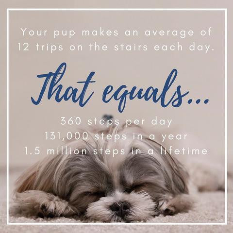 Dogs and Stairs: Safety Statistics That Might Surprise You