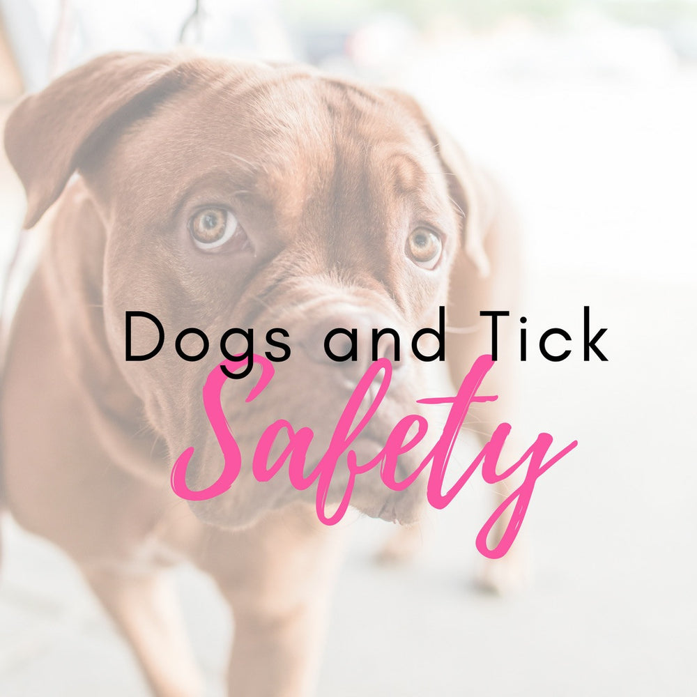 Dogs And Tick Safety
