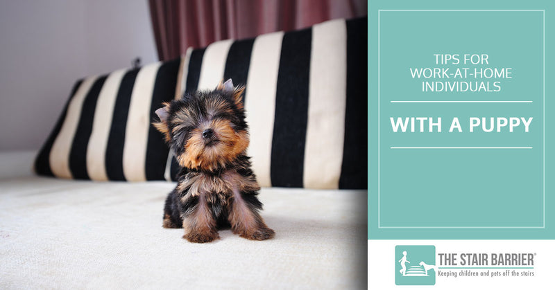 Tips for Work-At-Home Individuals With a Puppy
